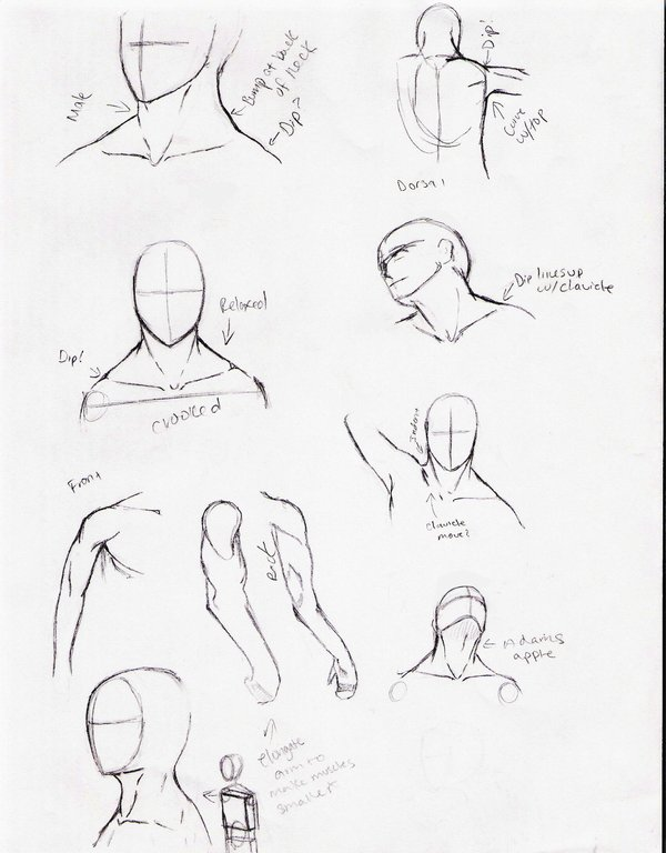 600x768 Neck And Shoulder Study By Delightsjd