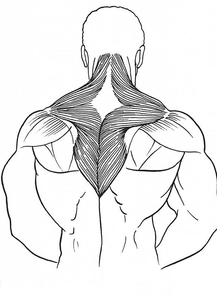 726x998 Shoulder Muscle The Basic Principles For A Beginning On Training