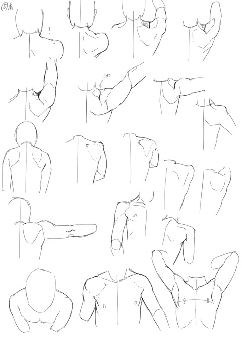 480x671 Drawing Helpreference Shoulders And Shoulder Blades Study