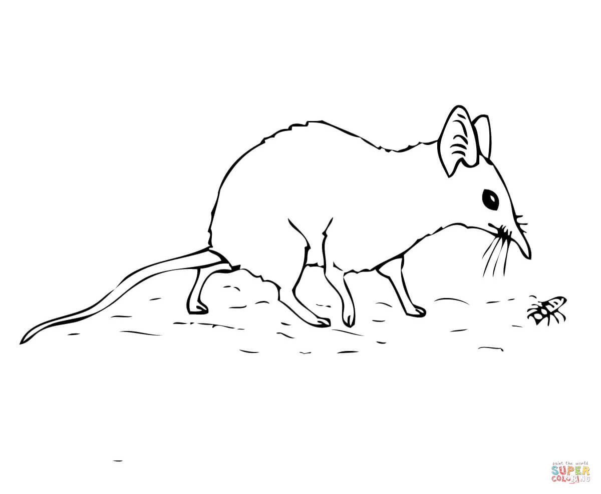 1200x988 Elephant Shrew Or Jumping Shrew Coloring Page Free Printable
