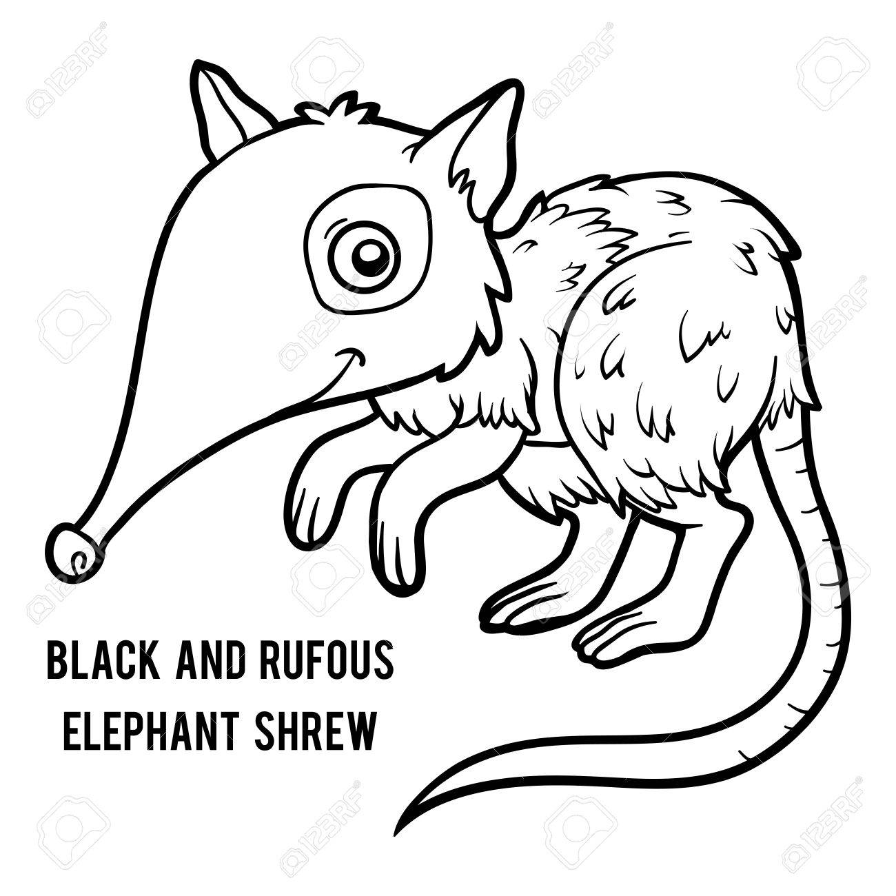 1300x1300 Coloring Book For Children, Black And Rufous Elephant Shrew