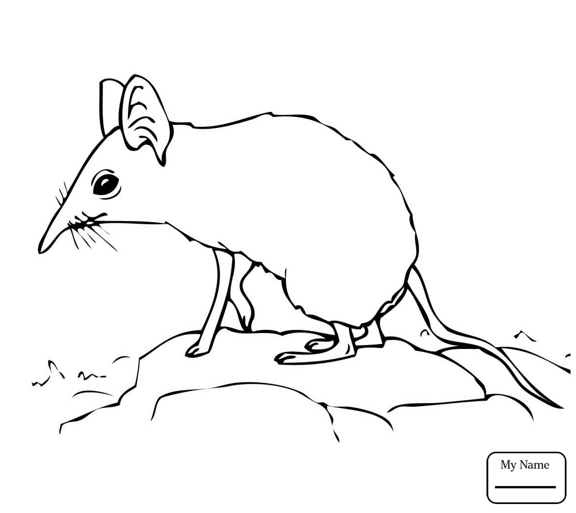 1157x1032 Cute Shrew Mammals Shrew Coloring Pages For Kids