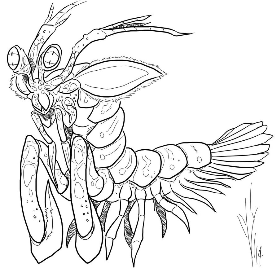 894x894 Mantis Shrimp Monster By Dragon Storm