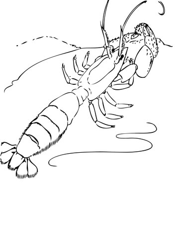 360x480 Ghost Shrimp Coloring Page Free Printable Coloring Pages