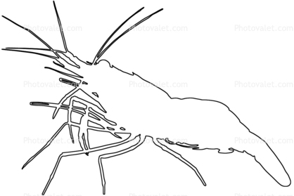 418x279 Shrimp, Prawn Outline, Line Drawing, Shape Images, Photography