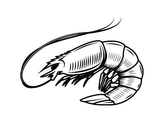570x429 Shrimp 1 Seafood Shellfish Fish Tank Sea Ocean Animal Svg