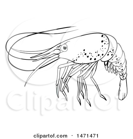 450x470 Clipart Of A Red Shrimp Facing Left