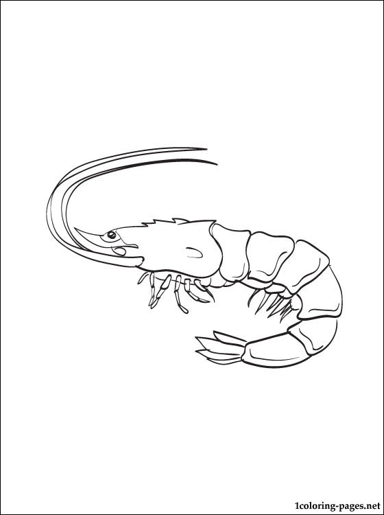 560x750 Coloring Page Shrimp Coloring Pages