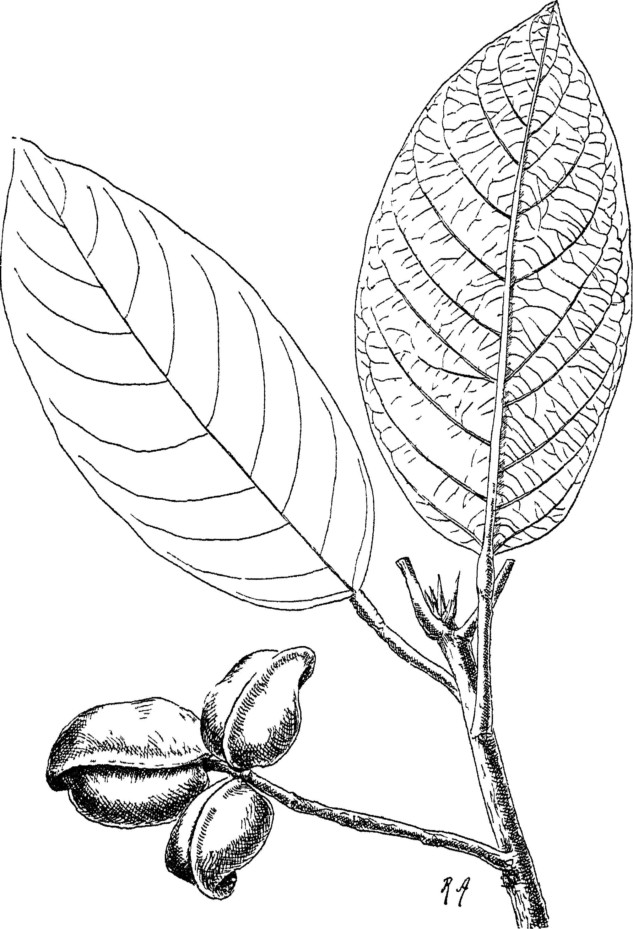 2016x2958 Fileindian Trees