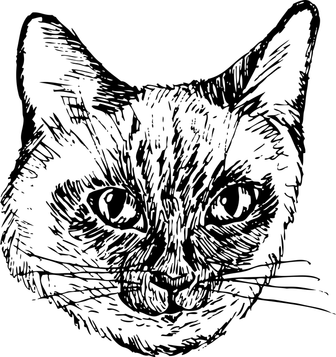 659x700 Siamese Cat Face (Sketch Style) Dog, Cat Amp Fur Baby Stamps