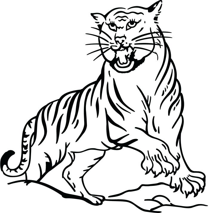 700x714 Siberian Tiger Coloring Page Tiger Template Drawing Siberian Tiger