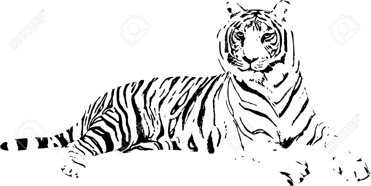 1300x653 Tiger Drawing Stock Photos. Royalty Free Business Images