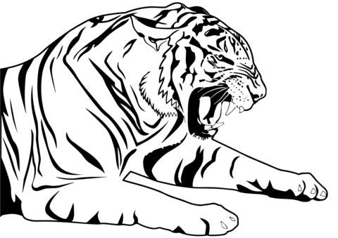 480x339 Tiger Coloring Page Free Printable Coloring Pages