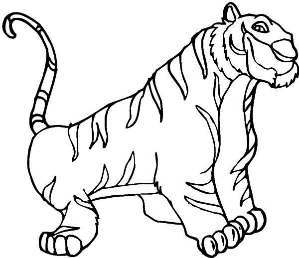 600x518 An Illustration Of White Siberian Tiger Coloring Page