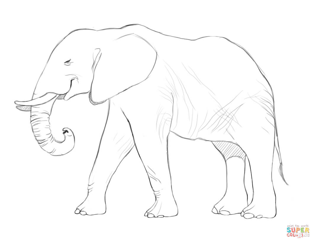 1068x824 Elephant Side View Drawing