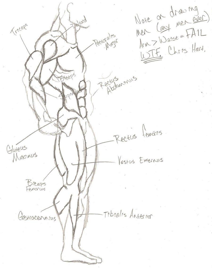 900x1136 Superhero Anatomy Side View By Nnylfets