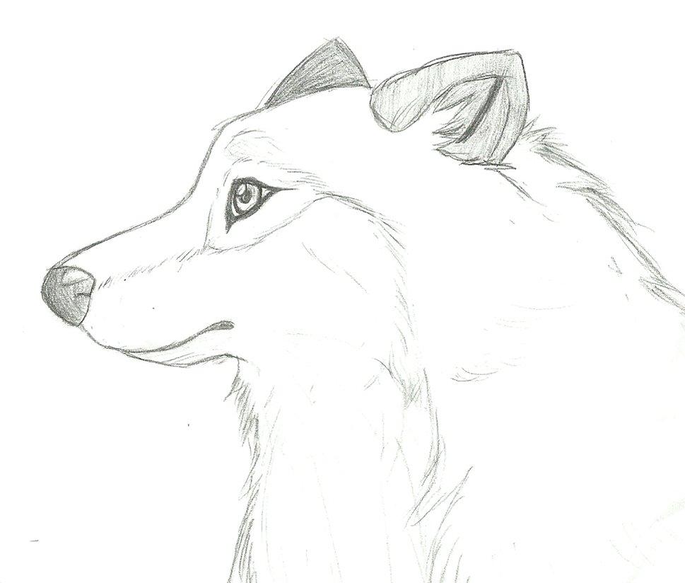 969x824 Wolf
