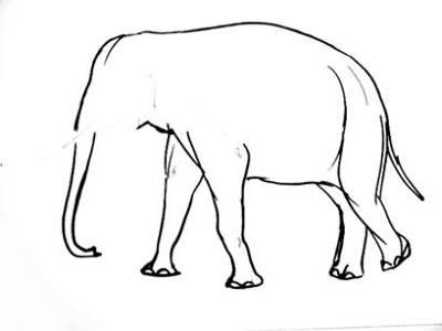 400x300 How To Draw An Elephant