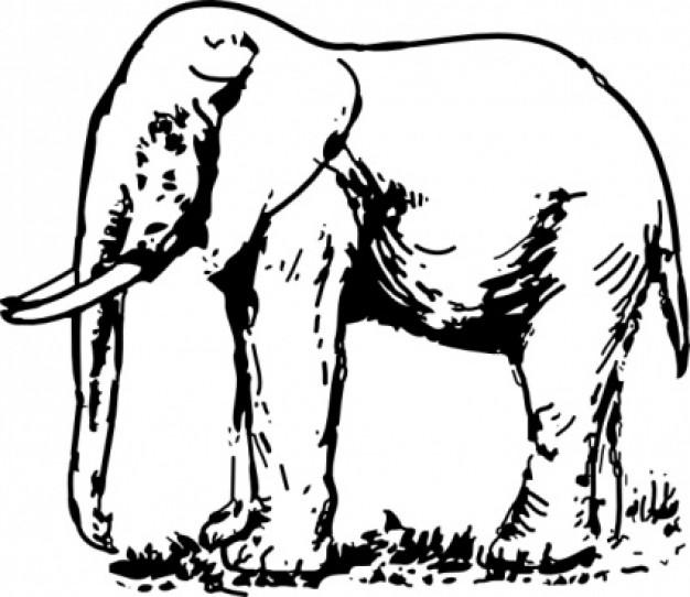 626x542 Indian Elephant Drawing Clipart Panda