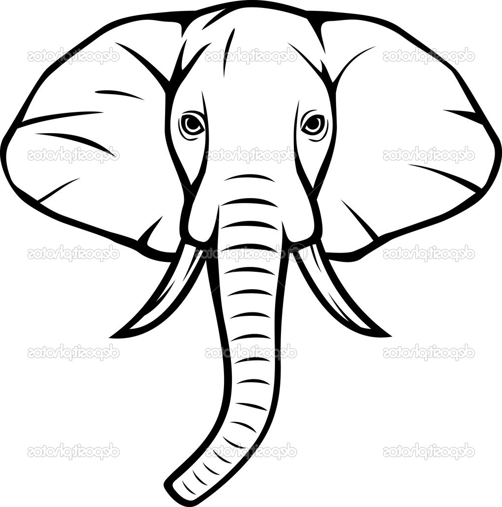 1013x1024 Indian Elephant Face Drawing Elephant Head Side View Stock Photos