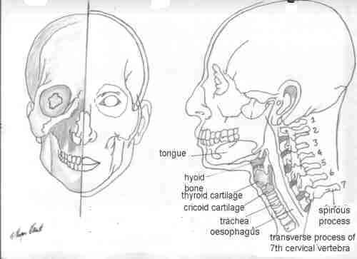 500x363 Wetcanvas Artsschool Online Basic Anatomy L2
