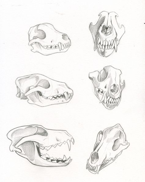 474x593 Been Home Sick The Past Few Days, So Drawing Wolf Skulls To Keep