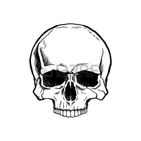 450x450 Colored Human Skull With A Lower Jaw. Royalty Free Cliparts