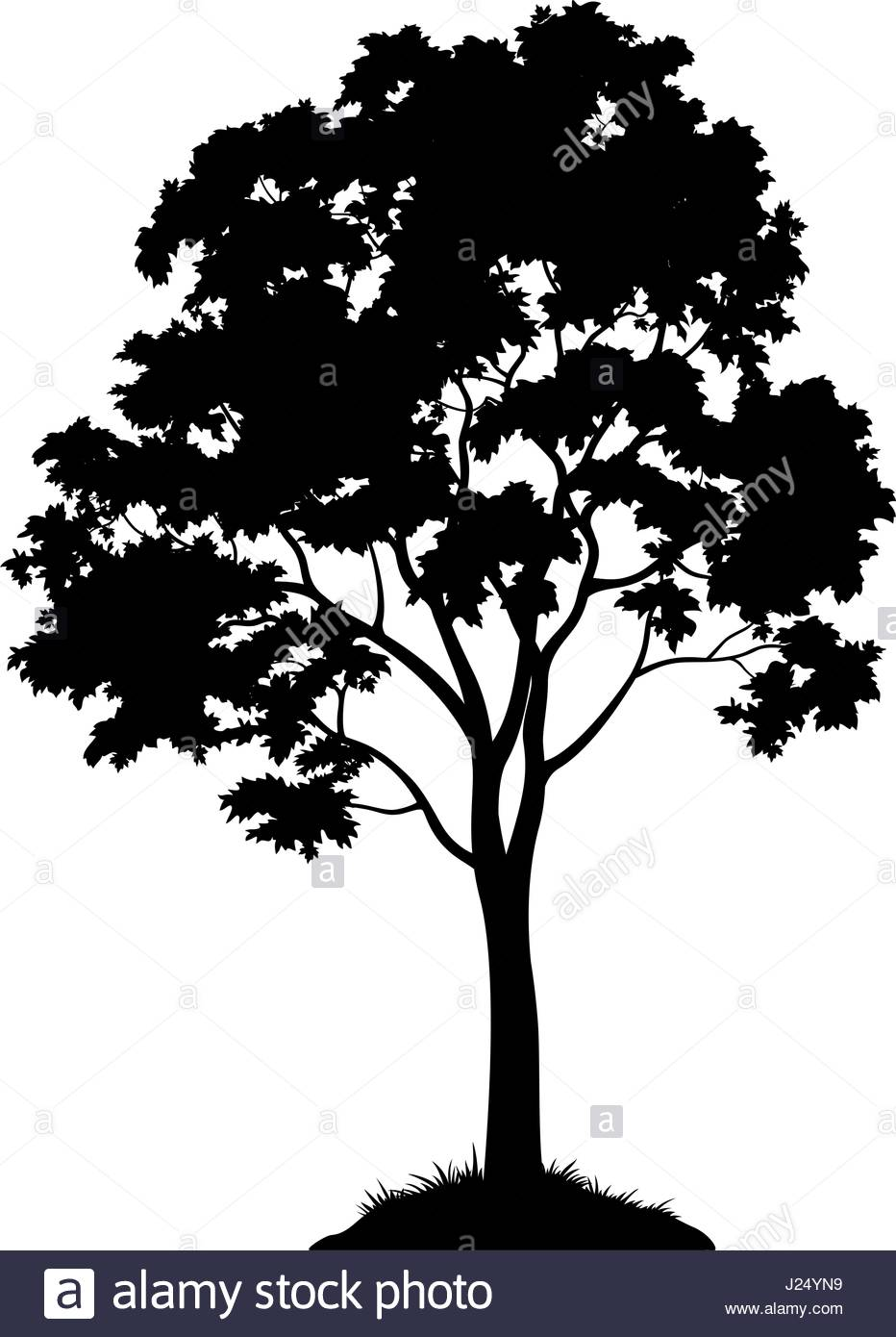 932x1390 Maple Tree Silhouette Stock Vector Art Amp Illustration, Vector