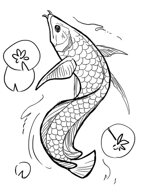 500x673 Another Tattoo Sketch!! Silver Arowana This Time