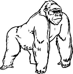 294x300 27 Best Gorilla Coloring Pages Images On Pinterest Kindergarten