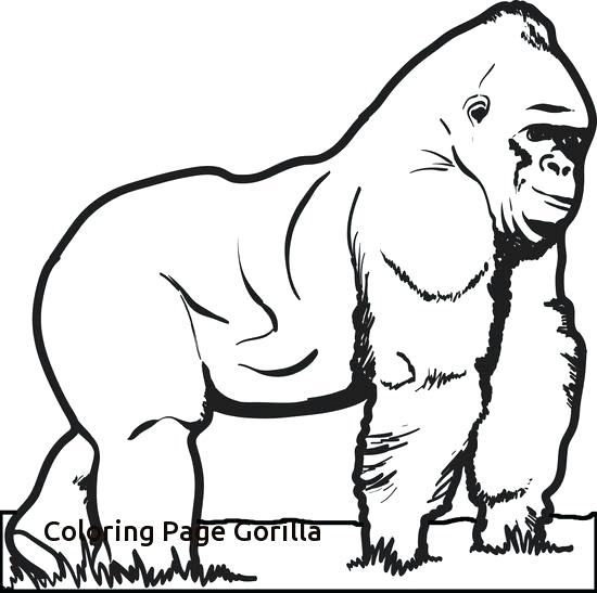 550x547 Magilla Gorilla Coloring Pages Animals Free Printable Pag On