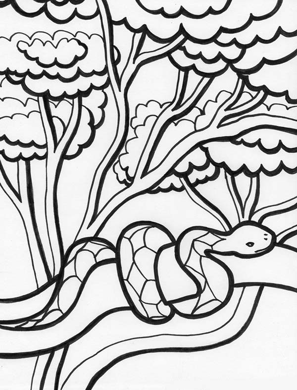 600x787 Rainforest Snake On Tree Coloring Page