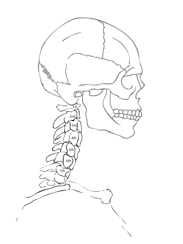 Simple Anatomy Drawing at GetDrawings.com | Free for personal use ...