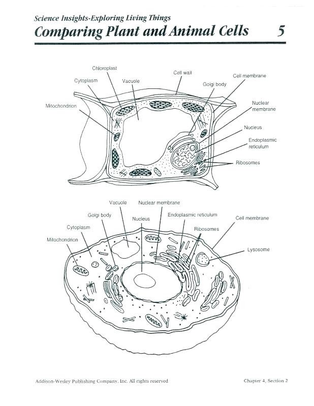618x799 Human Cell Coloring Page Animal Cell Coloring Animal Cell Coloring