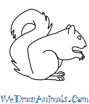 300x350 Coloring Pages Excellent Squirrel Drawing Simple Animal Drawings