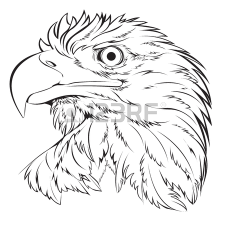 Simple Bald Eagle Drawing