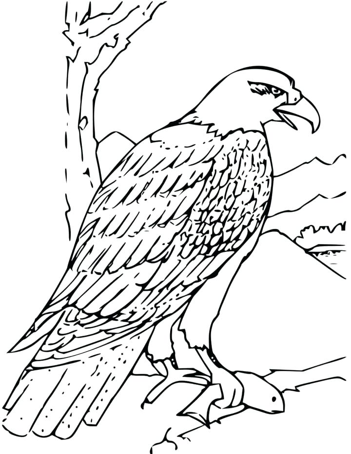 Simple Bald Eagle Drawing At Getdrawings Com Free For Personal Use