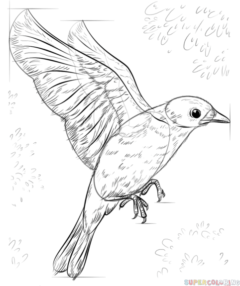 Simple Bird Line Art : Simple bird line drawing at getdrawings free for