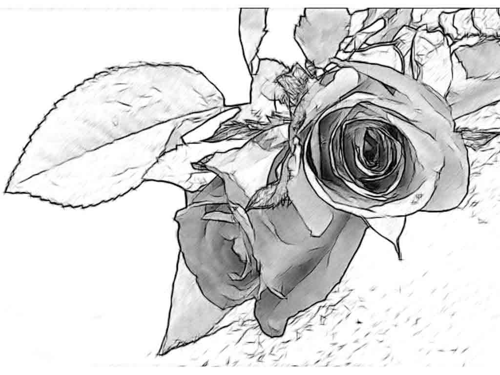 1024x768 Simple Flower Designs Pencil Drawing Rose Drawings Flowers Art