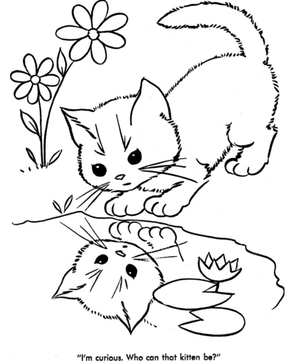 600x734 40 Simple Cat Drawing Examples Anyone Can Try