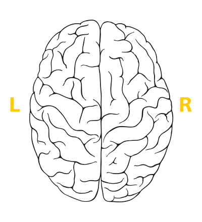 400x440 Right Brained Left Brained Take The Brain Test!