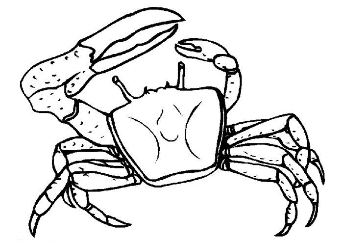 Simple Crab Drawing