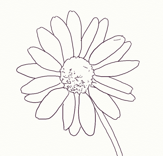 640x614 How To Draw A Realistic Daisy Daisy Drawing, Drawings
