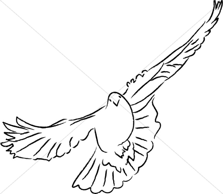 776x676 Dove Facing Forward Dove Clipart
