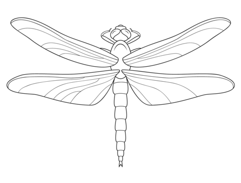 Simple Dragonfly Drawing at GetDrawings.com   Free for personal use ...
