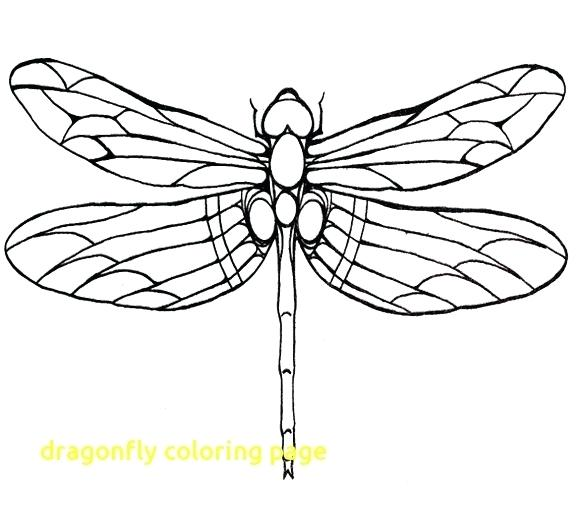 The Best Free Dragonfly Drawing Images Download From 739 Free
