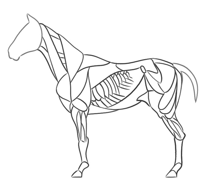 Simple Drawing Of A Horse