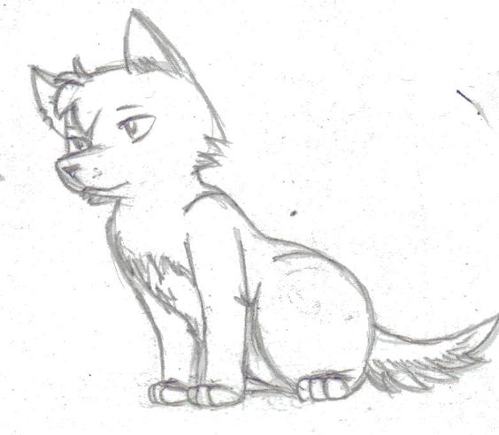 564x492 Gallery Wolf Drawings In Pencil Easy,