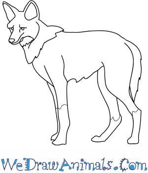 300x350 How To Draw A Maned Wolf
