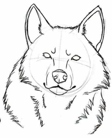 387x480 Looking Tiny Drawing Wolf Face Sketches As Well As Wolf Face